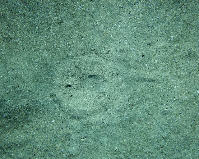 spot the stingray