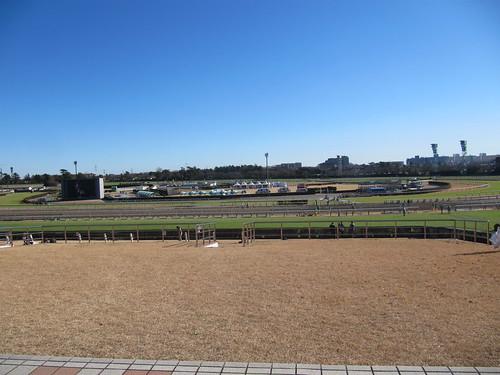 中山競馬場の芝スタンドから眺めた走路