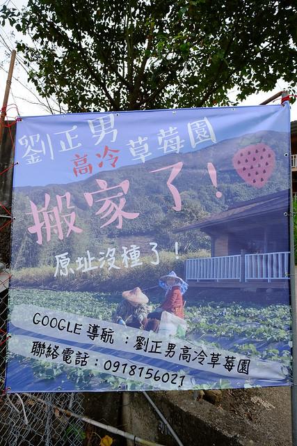劉正男高冷草莓園 (7)