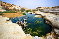 Oasis - Aqev-river - Negev-Desert - Israel