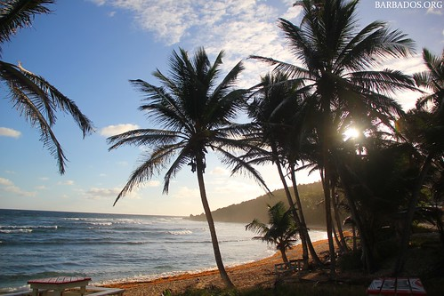 barbados sunrise palmtrees beach bay caribbean tranquil silhouette