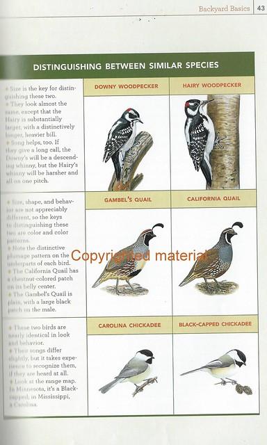 Backyard Birds p43 similar birds
