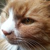 Bartulf... #buster #cat #chat #katt