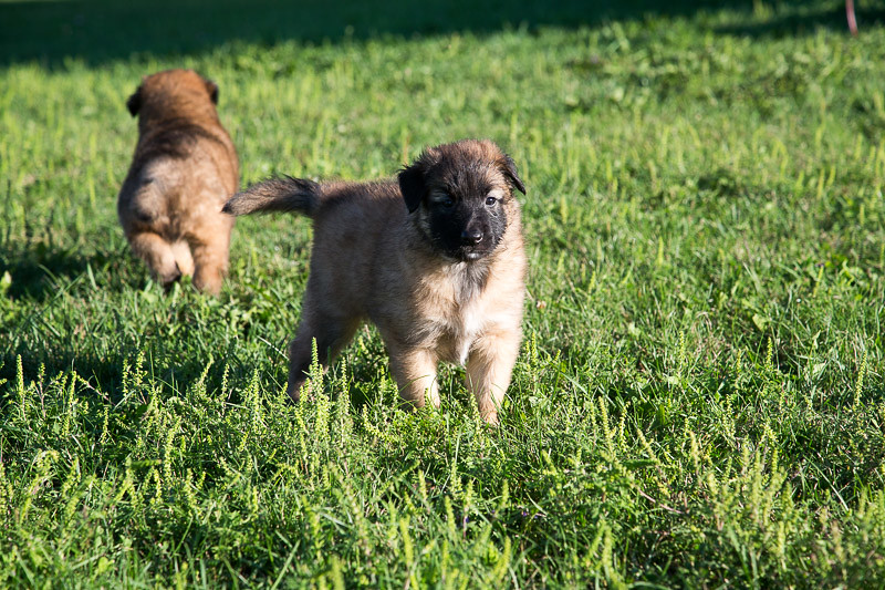 Marco/Thalys pups at 5 weeks