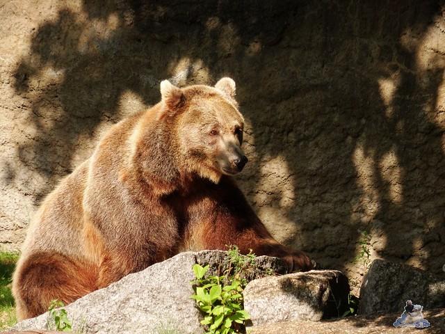 Zoo Berlin 28.08.2015  021