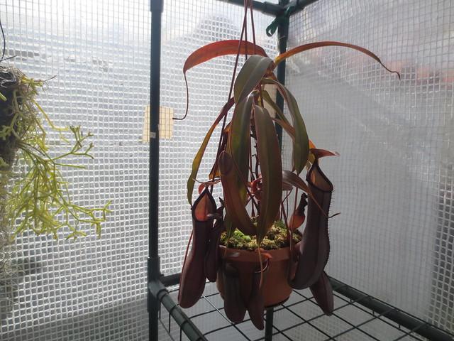 Plantas.werds.2012-2013 - Página 8 21090096169_3a54daa5b9_z