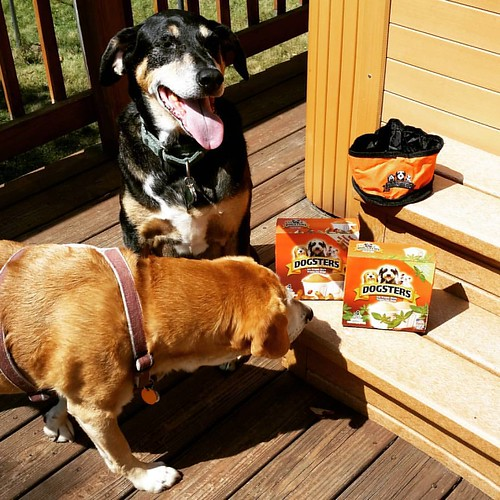 Stay tuned to the blog for a review & giveaway of #dogsters #frozendogtreats #dogstagram #instadog #houndmix #coonhoundmix #seniordog #seniordogsofinstagram #rescueddogsofinstagram #muttstagram #muttsofinstagram #happydogs #ilovemyseniordog #rescuedismyfa