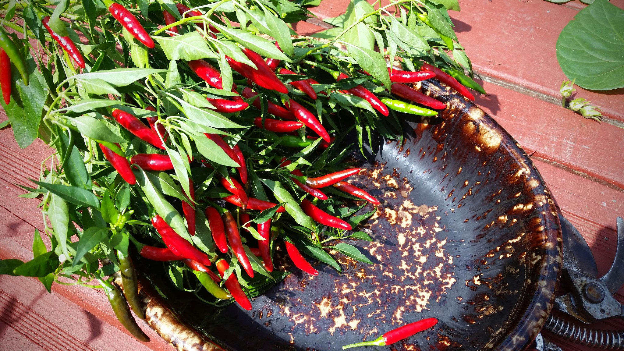 Peppers! Spicy!