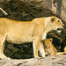 Tanzania, Mara, Serengeti National Park, lioness with her cubs (panthera leo) on a kopje by Eric Lafforgue