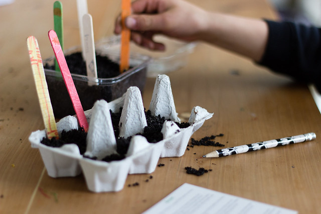 How to raise seedlings Label seeds