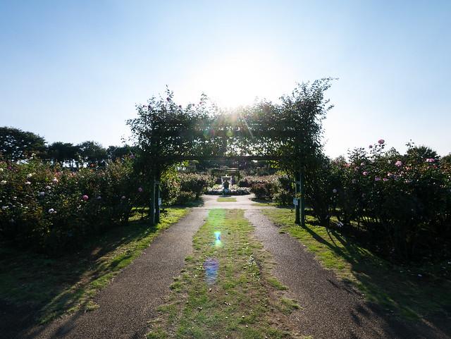 Beam in Garden