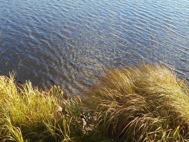 Niittynäkymiä syksyllä; järvikaislikkoa B 15.10.2015 Vanajavesi Hämeenlinna
