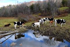 Dutchess County NY