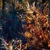 Esprît d'automne...!!!