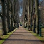 Tree lined walkway at Avenham Park