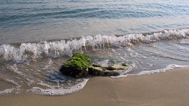 Whisper of the sea