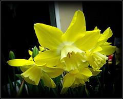 Spring Quartet