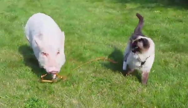 cat-pig-besties-lawn