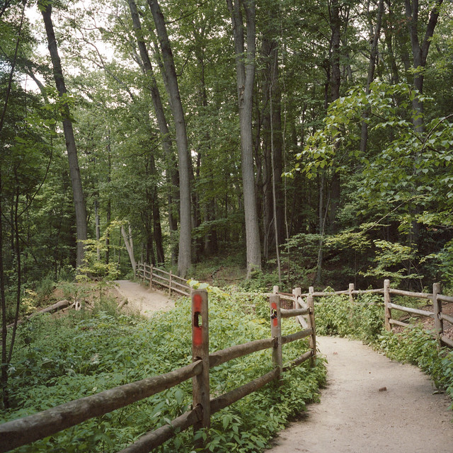 Glenn Stewart Trail II