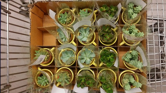 Selecting them plants at Ikea!