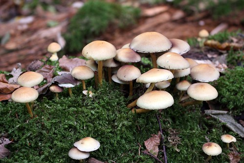 Mushrooms of Mooswald III