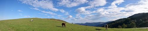 Caballos en la braña de Brenes / Horses in the braña de Brenes, Cantabria