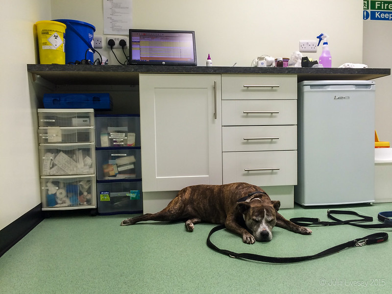 Jez waits in the vet's surgery