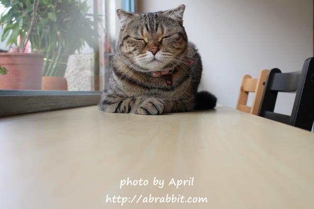 [台中]Dream cats cafe夢想貓咖啡–可愛的三隻貓貓,萌萌噠。也有貓咪寄宿唷!@西區 日興街