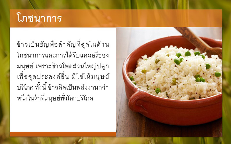 PowerPoint Template Rice
