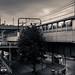 Train Home by Rob-Shanghai