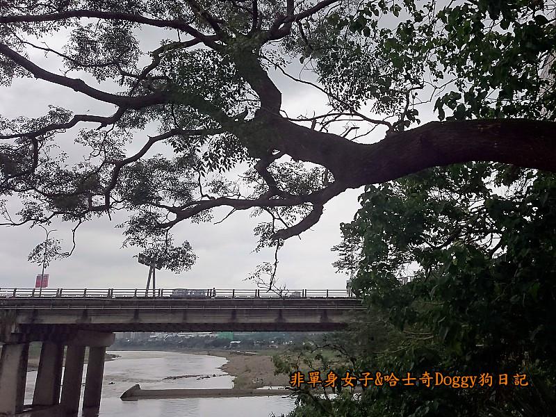 新店碧潭吊橋源平溪豆花大王04