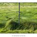 Grass and Fence by Godfrey DiGiorgi