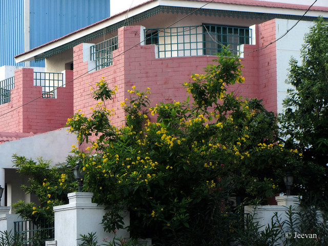 Same house in yellow blossoms