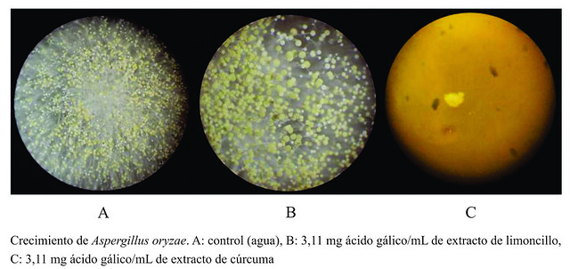 Crecimiento de Aspergillus oryzae