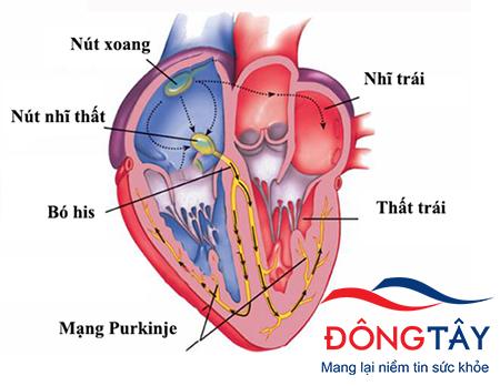 Loạn nhịp tim ở trẻ em - Bệnh không dễ phát hiện