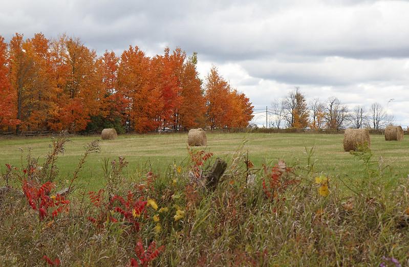 Autumn drive43
