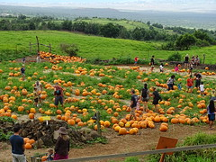 Kula Country Farm Pumpkin Patch on Maui, James Bre…