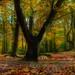 Autumn by Reg Ramai ( catching up)