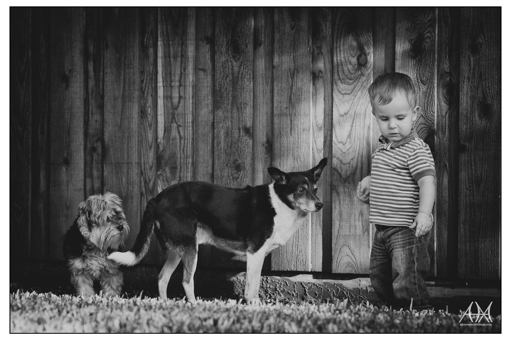 A boy and his dogs (bw)