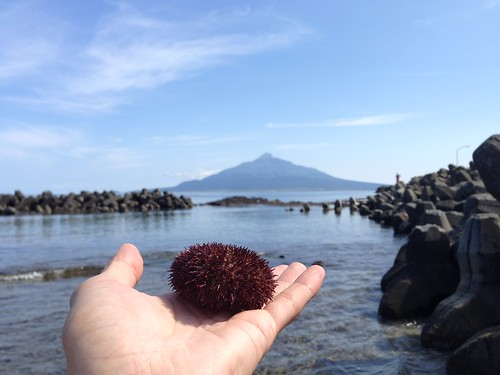 rebun-island-sankaku-beach-sea-urchin01
