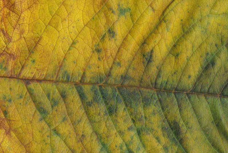 CreativeCommons - Autumn leaves - 2015 Series 1 - 01 by #TexturePalace