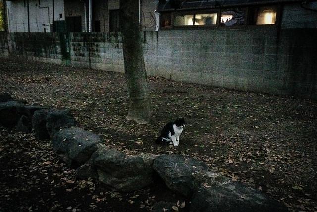 Today's Cat@2015-12-15