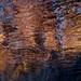 Reflet...!!! by Denis Collette...!!!