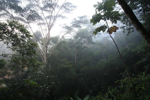 Header of Amazon Rainforest