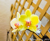 ~ Orchids With A Fuji X T1 4 ~ by iTail ~ 3.3 MV ~ Thanks !!