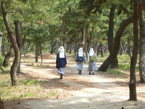 Co-Gangneung-Gyeongpo-Pinède (1)