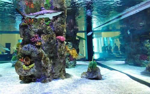 20,000 gal. SW Shark Exhibit - Corporate Office - LYNY - 3