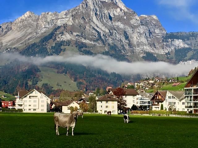 Engelberger Cow, Engelberg, Switzerland