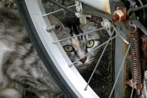 cat, Nishinari, Osaka