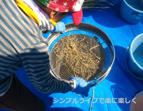 稲刈り・脱穀、ふるい